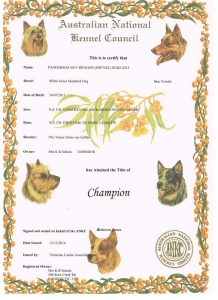 Championship certificate_resize